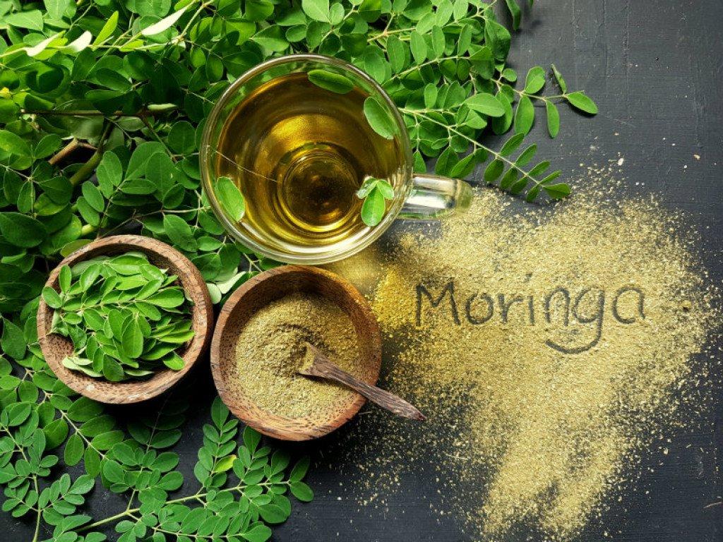 moringa-biljka