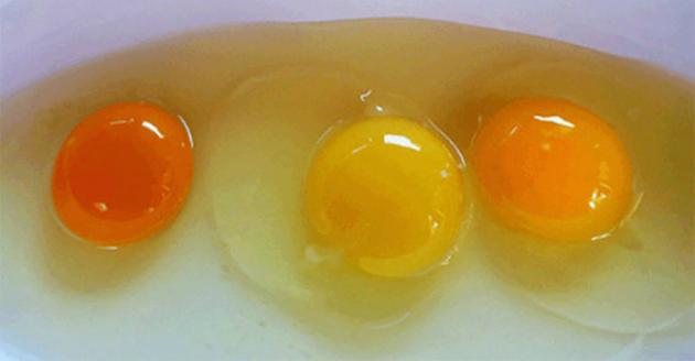 organsko-jaje-zumance