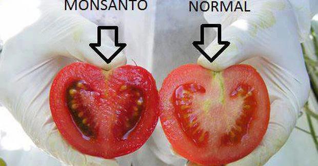 paradaiz-normalan-i-gmo