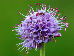 Herbarium - Preskočica