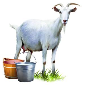 koza mlijeko sir