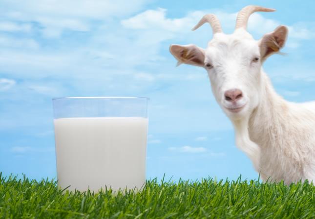 ljekovito kozije mlijeko