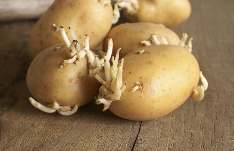 krompir sa zelenom korom i klicama