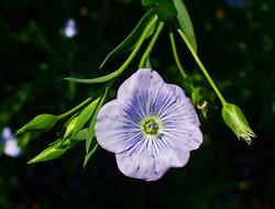 Herbarium - Lan