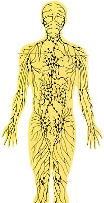 Limfni čvorovi