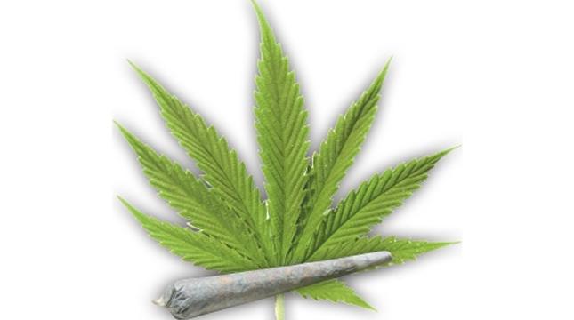 štetnost marihuane ili kanabisa
