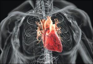 srce u tijelu