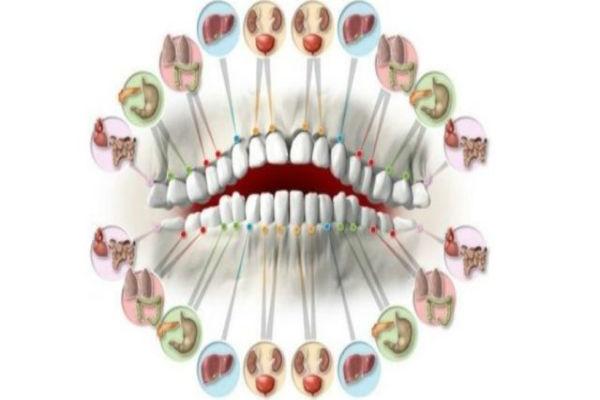 zubi-organi